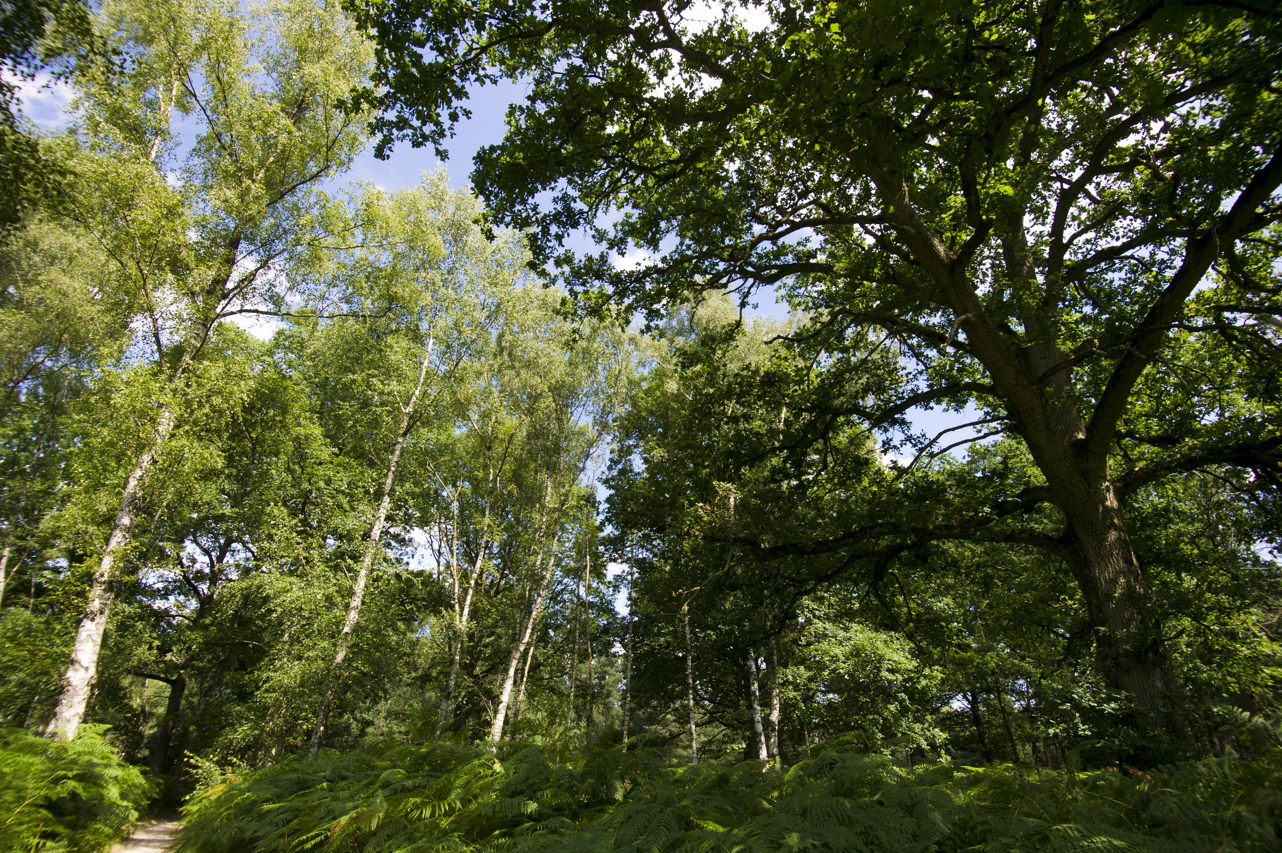 Le bois de Rochefort