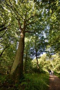 Forêt de Sainte Apolline - CD 78 © N. Duprey