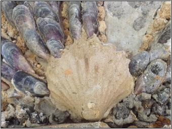 Pièce de décor trouvée dans les fouilles en forêt de Marly, été 2017. Crédit : Omage