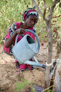 Agroécologie à Ndem © CD78 / N. Duprey