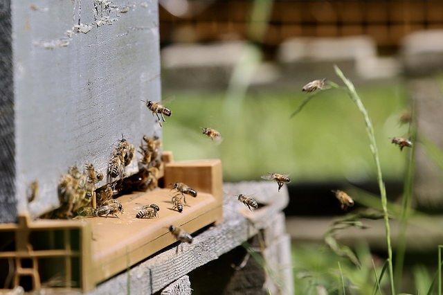 Fête des abeilles : comprendre et préserver © CD78/N.DUPREY