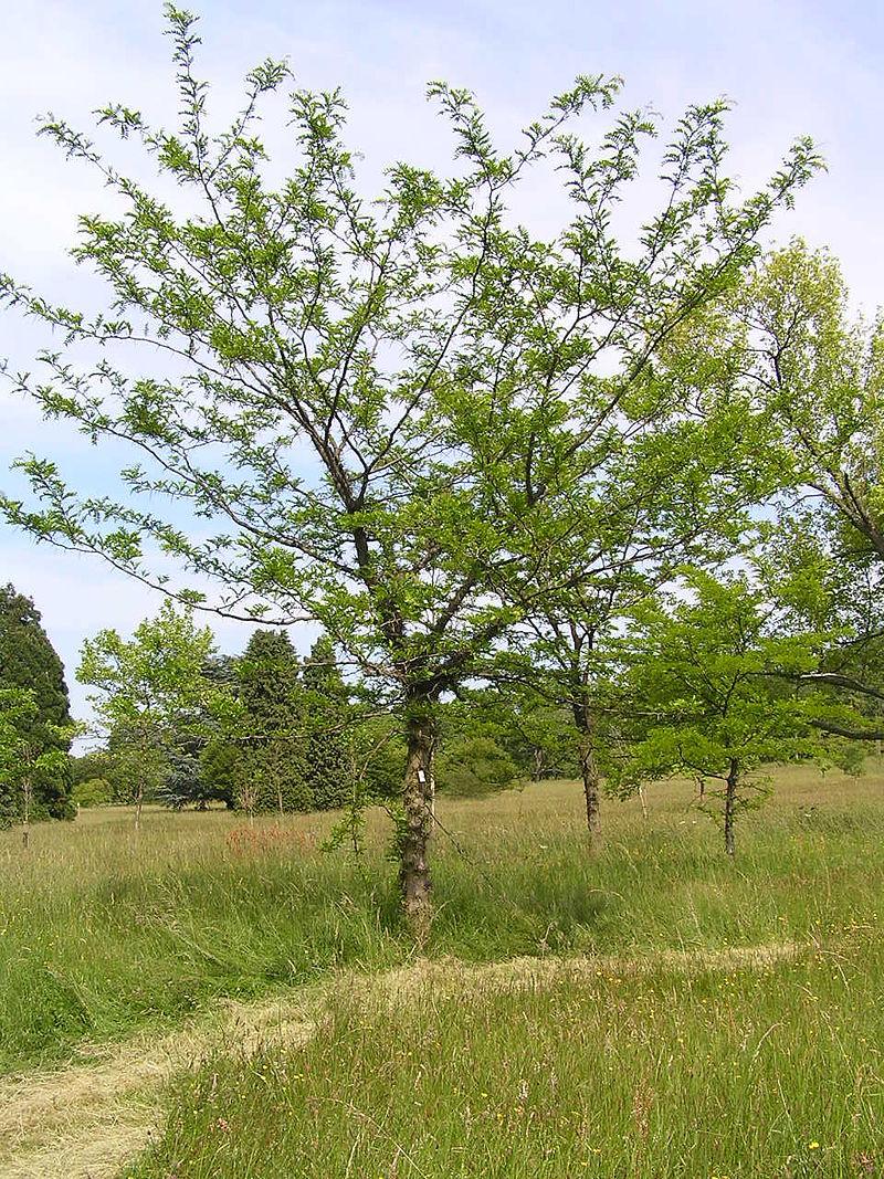 L'arboretum de Chèvreloup entièrement ouvert au public © Wikimédia