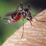 Le moustique tigre : prévention et solutions
