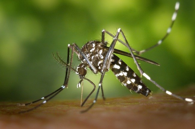 Le moustique tigre : prévention et solutions © Pixabay