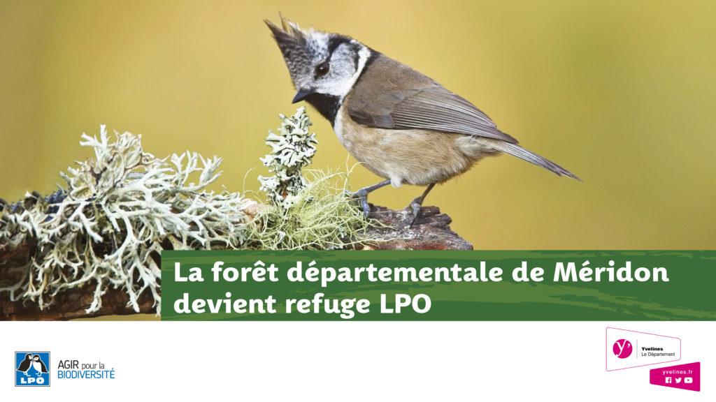 La forêt de Méridon fête les oiseaux !