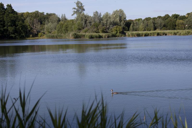 Que faire ce week-end dans les Yvelines ? © CD78/N.DUPREY