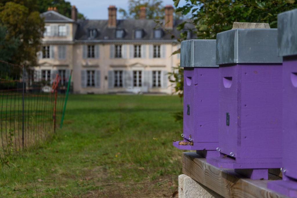 Ruches et abeilles à Versailles
